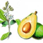As propriedades medicinais do Abacateiro