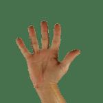 Os dedos da mão