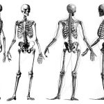 O esqueleto e a coluna vertebral