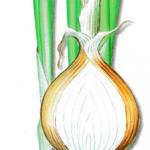 As propriedades medicinais da Cebola