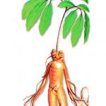 As propriedades medicinais do Ginseng