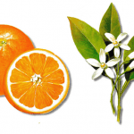 As propriedades medicinais da Laranjeira