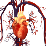 As Doenças Cardiovasculares  – Compreender as Doenças Graves