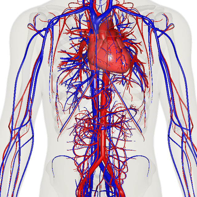 Como o Sistema Cardiovascular Adoece – Compreender as Doenças Graves