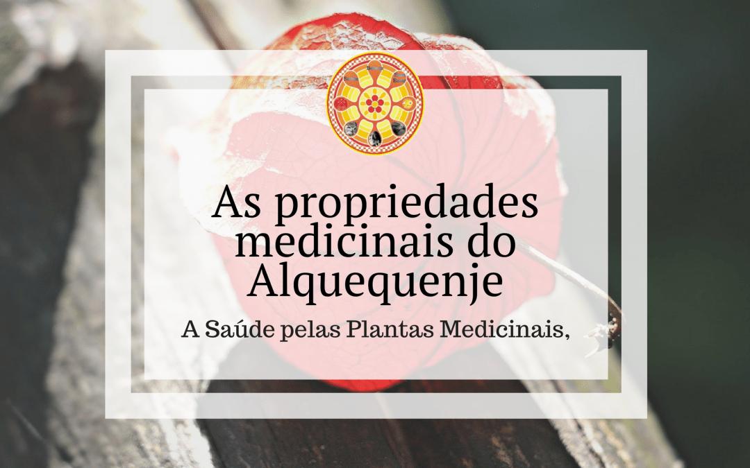 As propriedades medicinais do Alquequenje