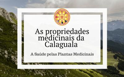 As propriedades medicinais da Calaguala