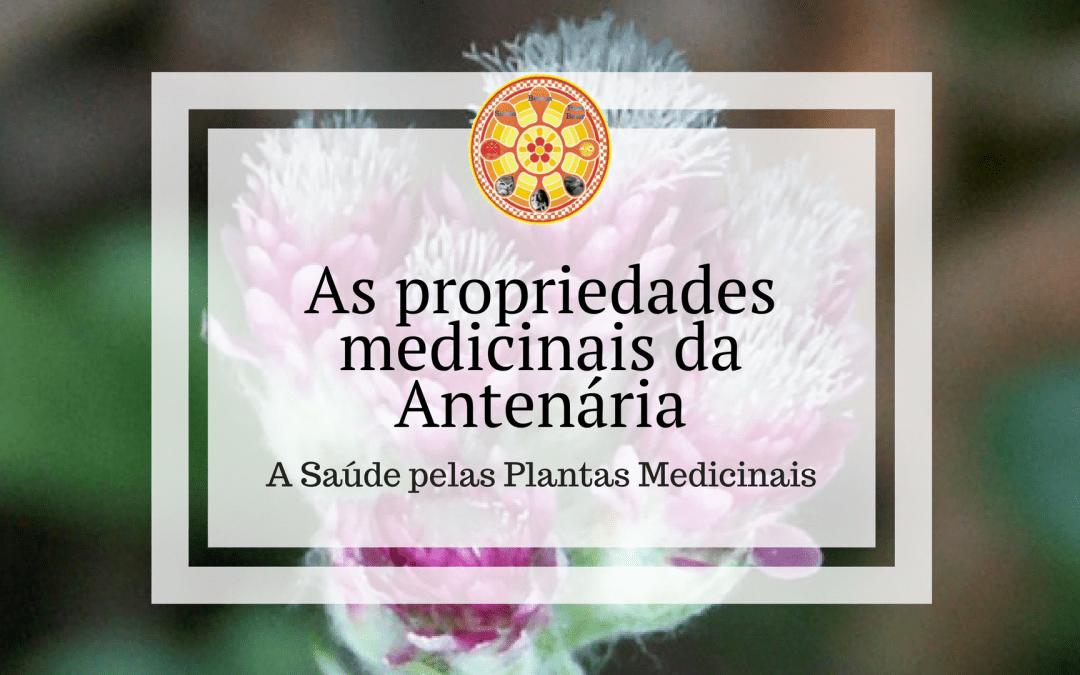 As propriedades medicinais da Antenária