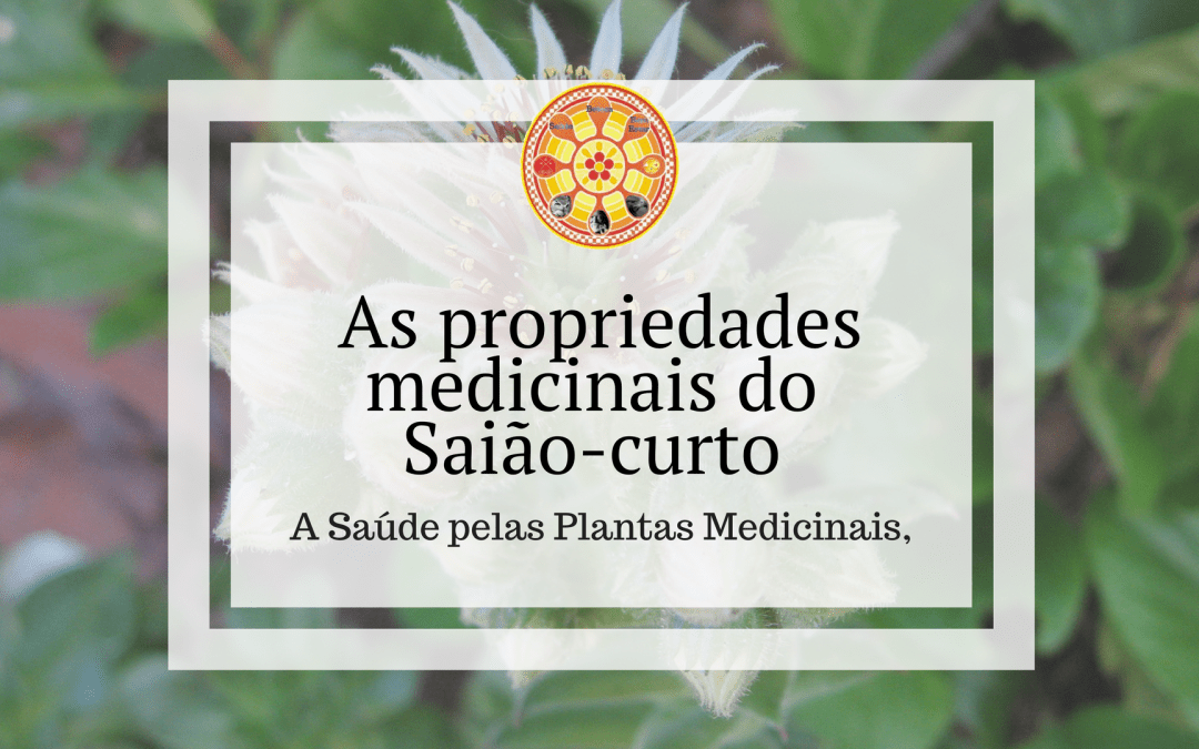As propriedades medicinais do Saião-curto
