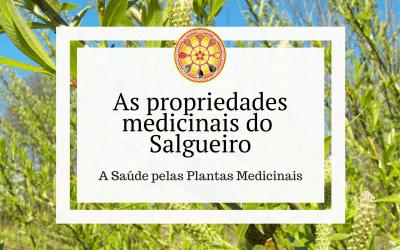 As propriedades medicinais do Salgueiro-branco