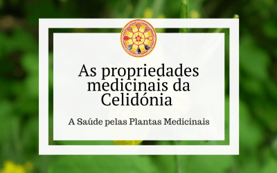 As propriedades medicinais da Celidónia