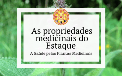 As propriedades medicinais do Estaque