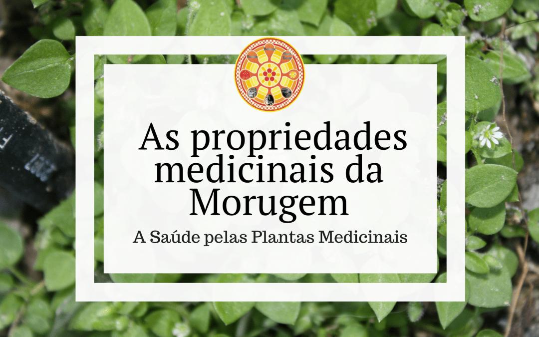 As propriedades medicinais da Morugem