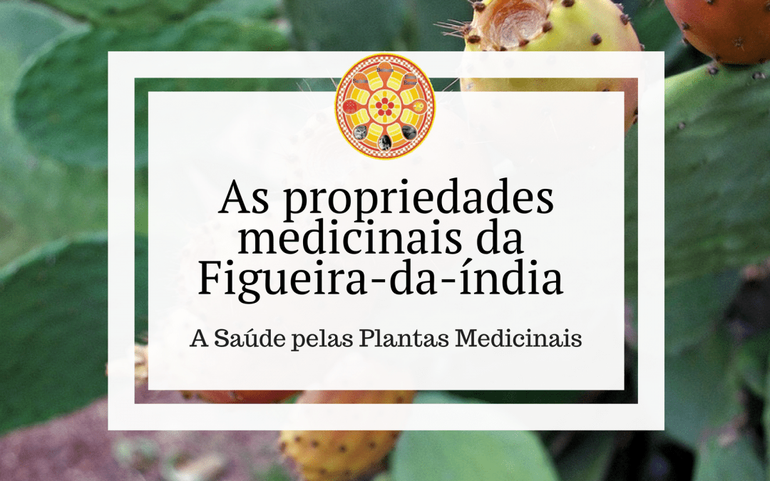 As propriedades medicinais da Figueira-da-índia