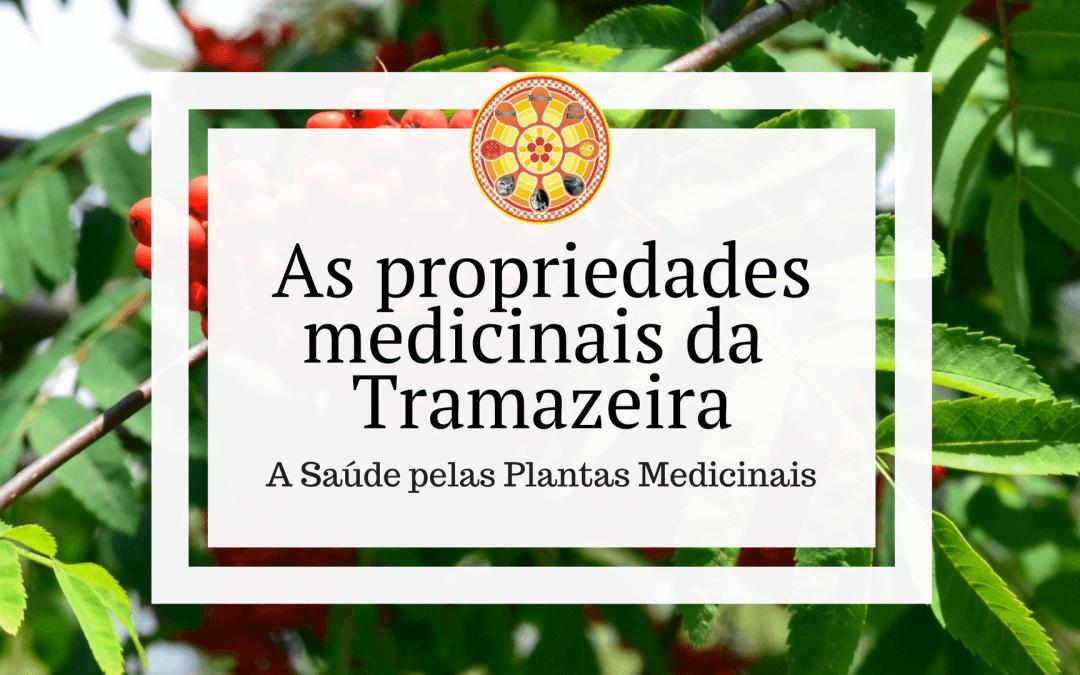 As propriedades medicinais da Tramazeira