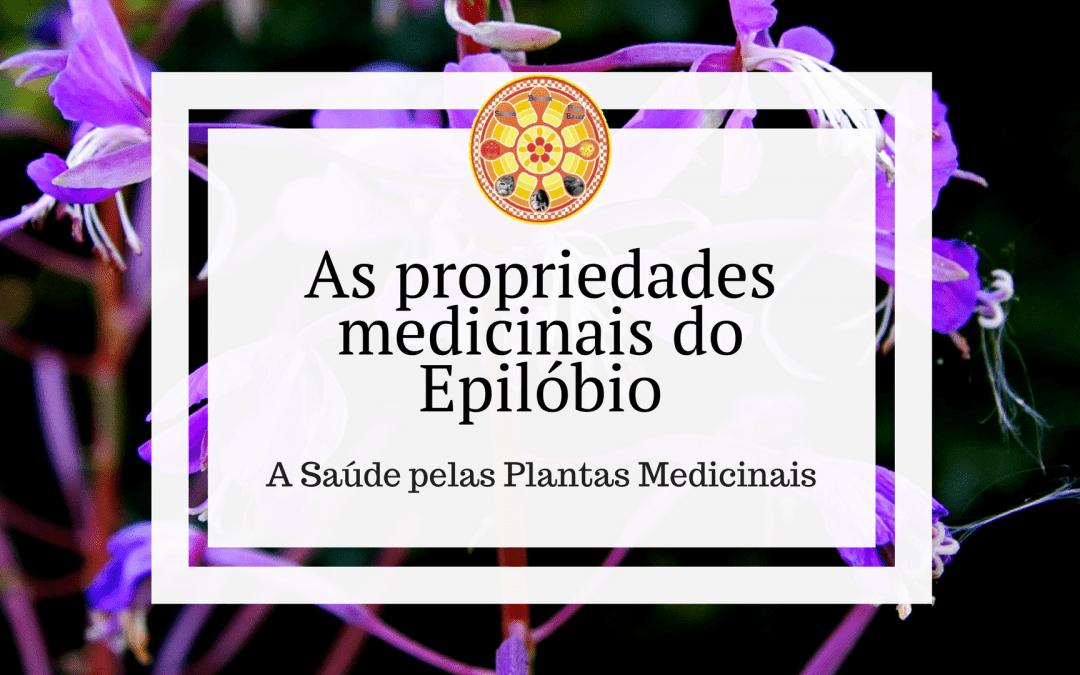 As propriedades medicinais do Epilóbio