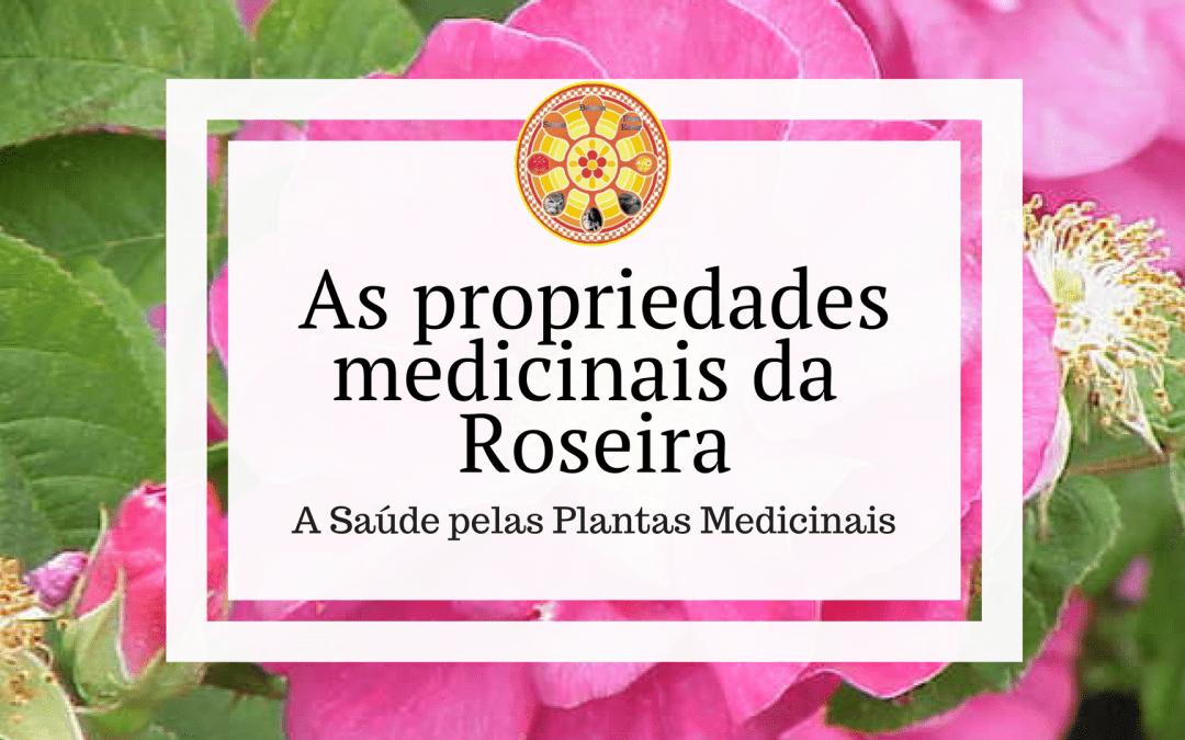 As propriedades medicinais da Roseira