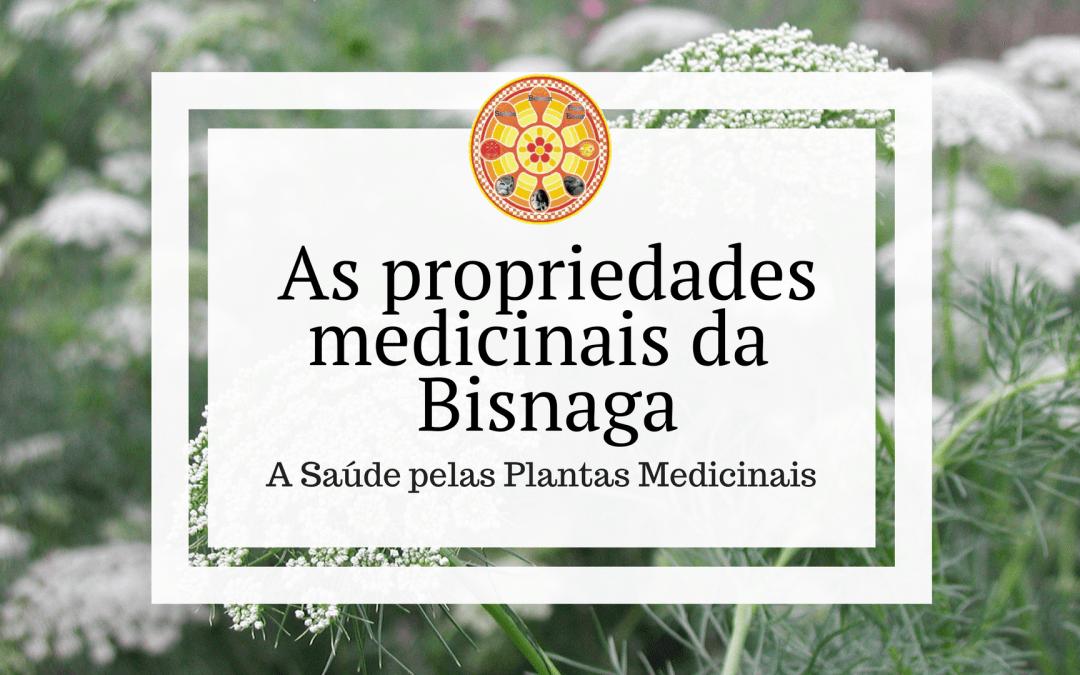 As propriedades medicinais da Bisnaga