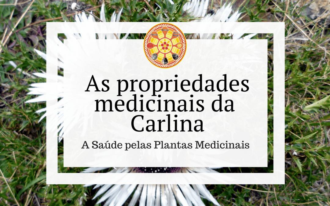 As propriedades medicinais da Carlina