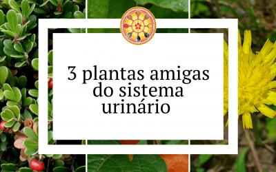 3 plantas amigas do sistema urinário