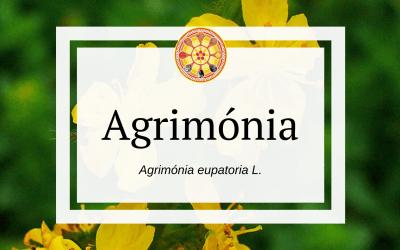 Agrimónia – Agrimónia eupatoria L.
