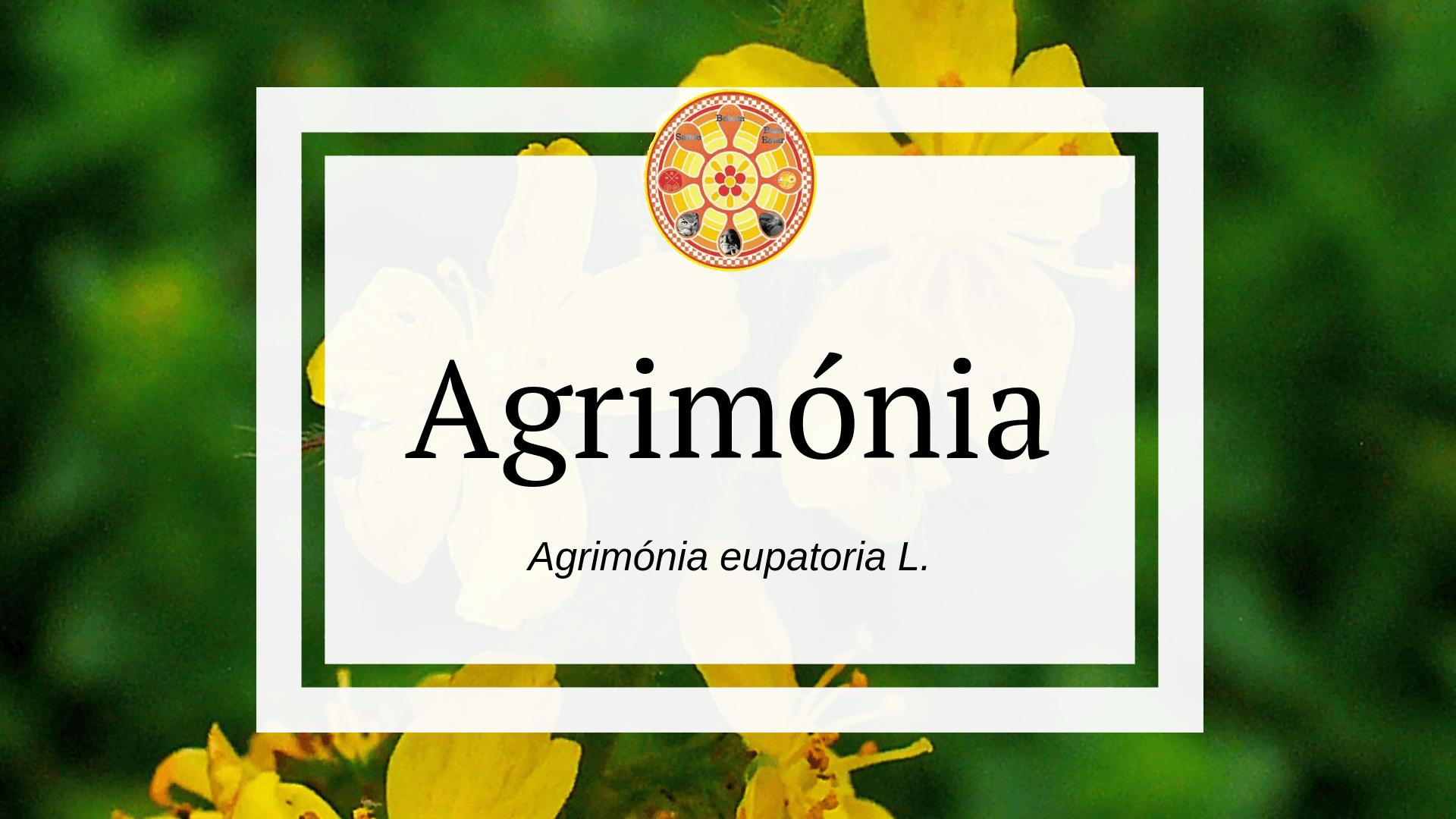 Agrimónia eupatoria L.