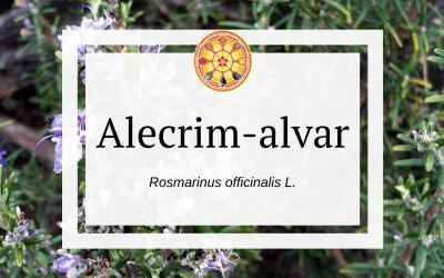 Alecrim-alvar – Rosmarinus officinalis L.