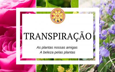 Transpiração  – As plantas nossas amigas