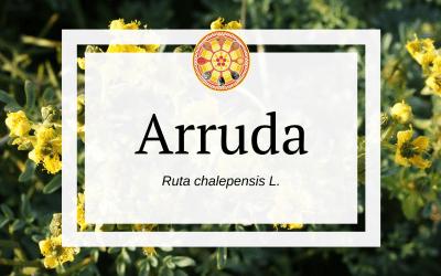 Arruda – Ruta chalepensis L.