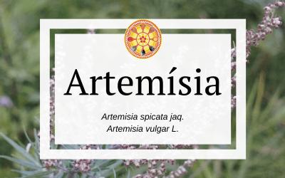 Artemísia – Artemisia spicata jaq.
