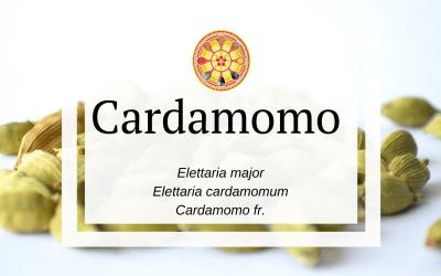 Cardamomo – Elettaria cardamomum