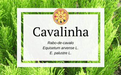Cavalinha – Equisetum arvense L.