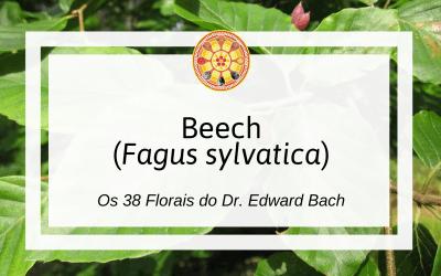 Beech – Florais de Bach