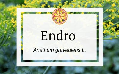 Endro  – Anethum graveolens L.