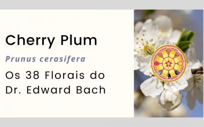 Cherry Plum – Prunus cerasifera