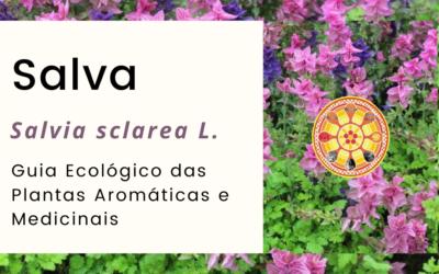 Salva-esclareia – Salvia sclarea L.